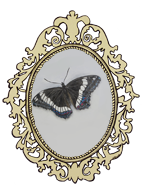 2''Butterfly-Frame-No-White